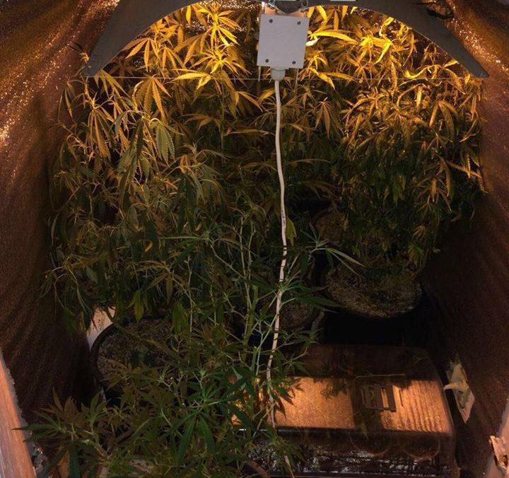 Книги выращивание марихуаны озноб конопля