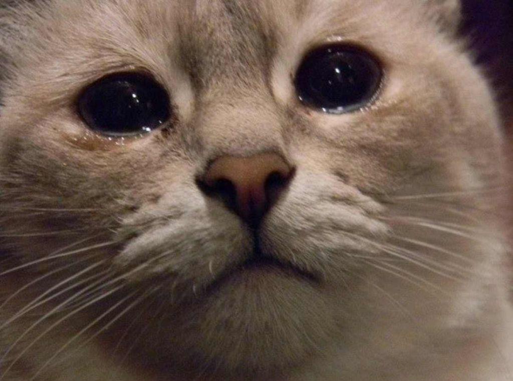 картинка котенка в слезах сутенер, отец